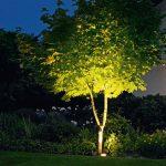 Eclairage exterieuren contre plongee pour mise en valeur d arbre