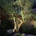 Lumiere exterieur sur arbre olivier en indirect