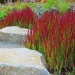 Jardin japonais ou herbe et roches se melent
