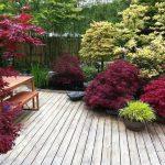 Jardin japonais sur terrasse