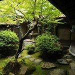 Une cour avec jardin japonais de mousse