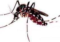 Comment reconnaitre le moustique tigre
