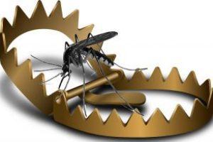 Piège anti moustique