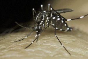 Moustique tigre virus du nil